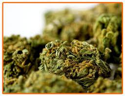 quality weed now at  917 725 7722