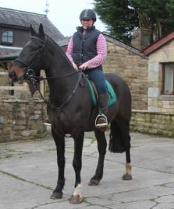 Friesian Horse for Adoption You Can Contact For More Pics And Infor 661 200-7861