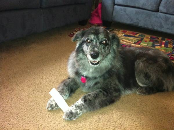 Help find Mollie   S 14th and Oak