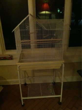Female Cockatiel with Cage - $130 (Hammond)