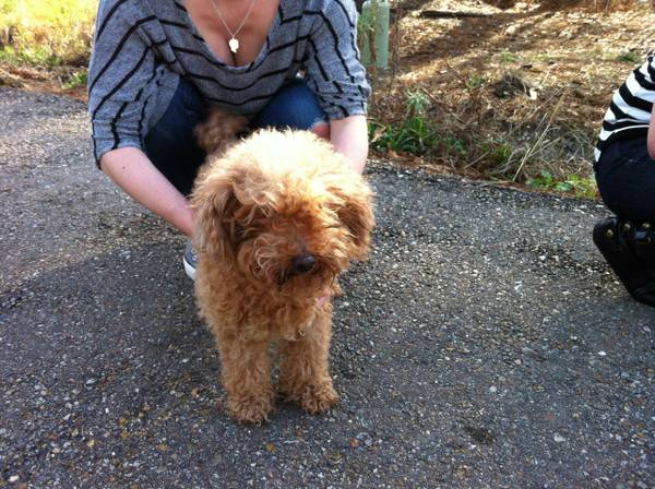 found dog safe in SPCA of Livingston care   walker