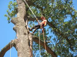 Dependable And Affordable Tree Service