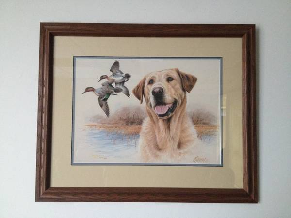 Jim Killen Yellow Lab Print  signed and numbered  -   x0024 50  Nederland