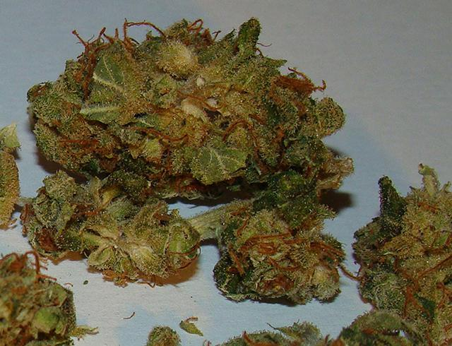 Sativa Strains Maui Waui  Lemon Haze  262 297-4430