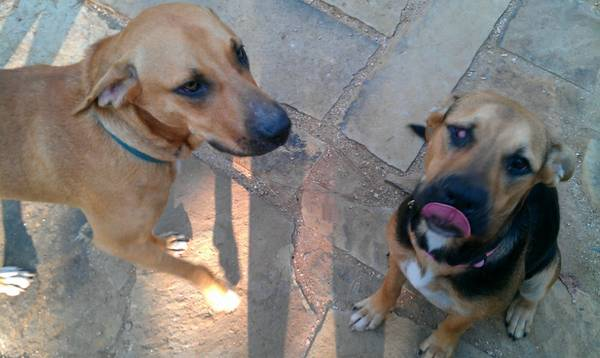 Found  2 Sweet Dogs - Mixed breeds  Colmesneil  TX