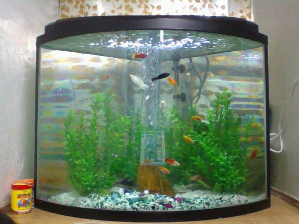 35 Gallon fish tank -  150  Houston in aleif