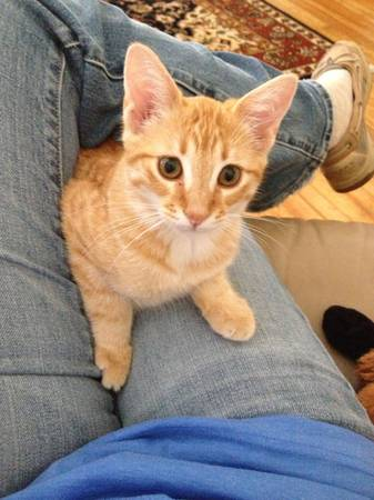Lost kitten cat    100 00 Reward   Santa Rita