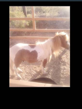 Lost Pony South Odessa