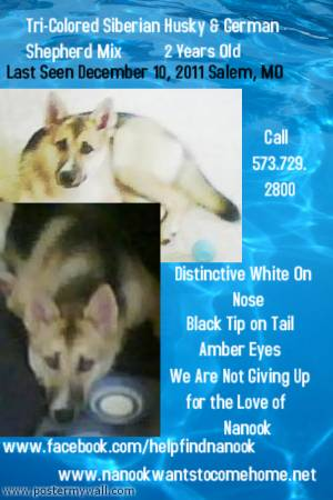 Please find Nanook  reward  therapy dog