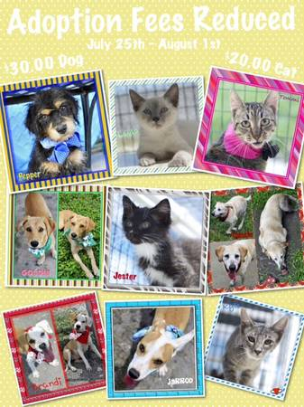 ADOPTION FEES REDUCED --- WEEK OFJULY 25TH THRU AUGUST 1ST  2626 Holly Road