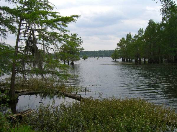 $50000 20 acres Nantachie Lake (Off Mott Road)