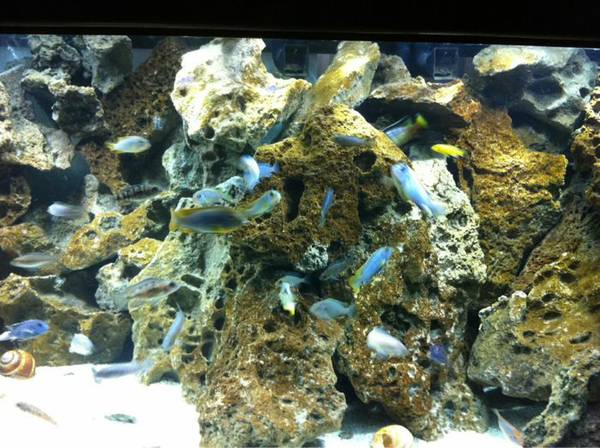 75 gallon aquarium fish tank - $1 (Alexandria)