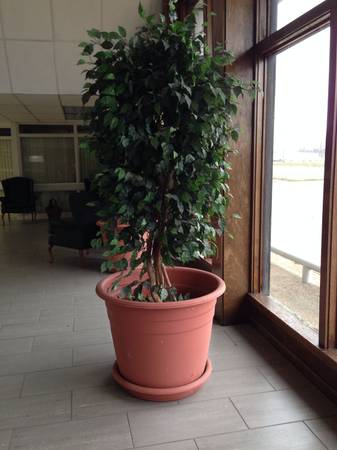 4 Silk potted trees -   x0024 300  Ferriday  la