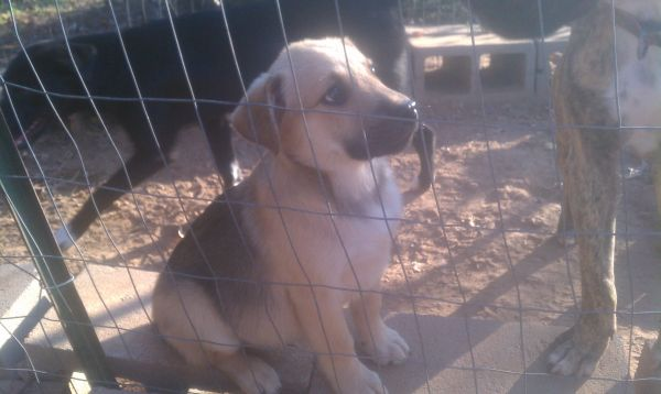 free puppies (hearne )