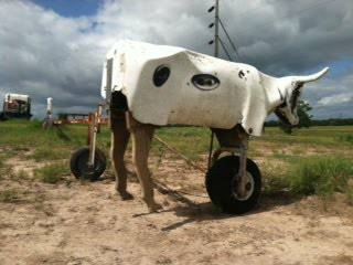 Buford Roping Dummy - $500 (Bedias)
