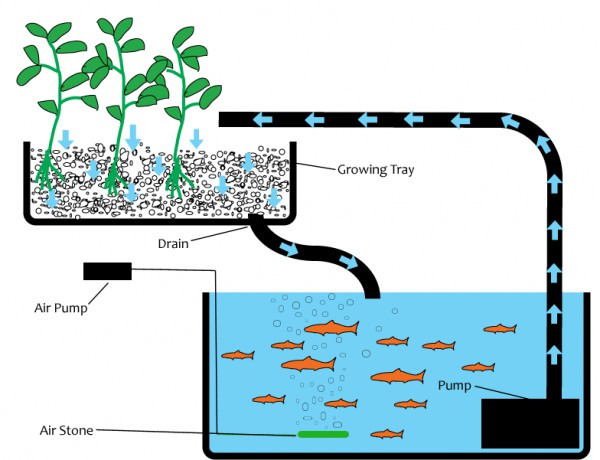Survival Aquaponics System