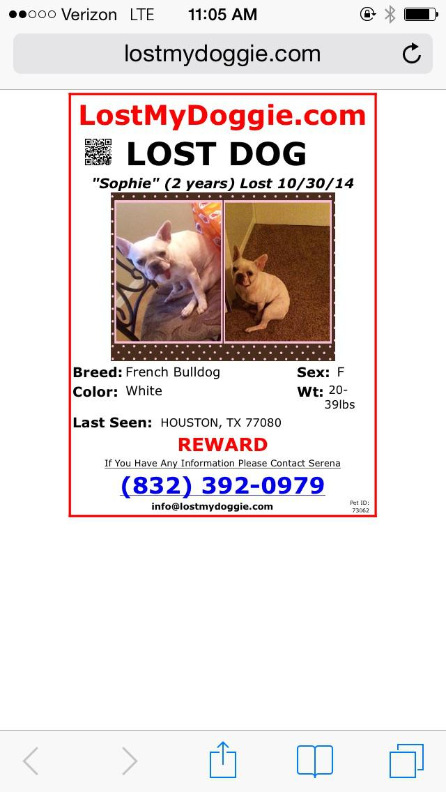 Lost missing French bulldog
