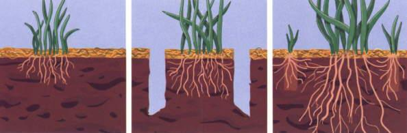 Aeration is The Answer