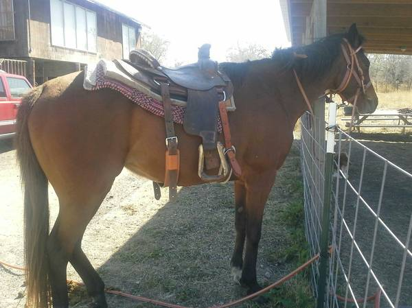 horse for trade or sell  Sandia