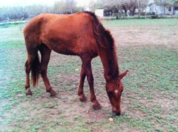 many many horses for sale (edinburg)