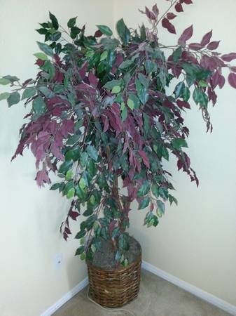 DECORATIVE FAUX FICUS TREES - $85 (CC-SOUTHSIDE)