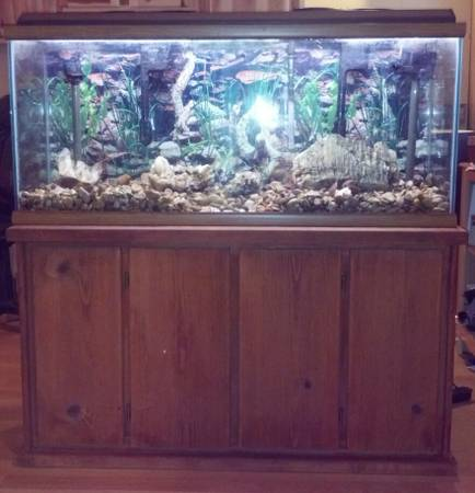 55 GALLON SHOW FISH TANK WITH STAND - $200 (longview)