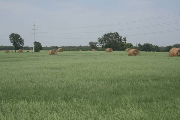 HIGHLY FERTILIZED TIFTON 44 HAY  ROUND BALES FOR SALE  Yantis Texas
