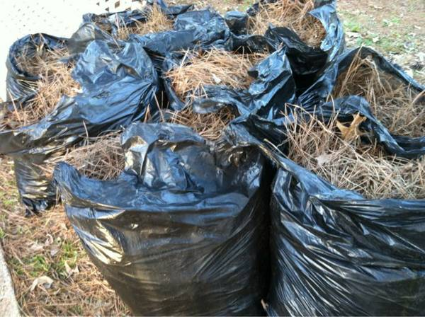 15 trash bags of pine needles -   x0024 5  Tyler tx