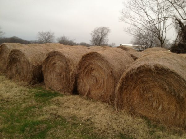 4x5 balles of good hay - $35 (alba 75410 zip)