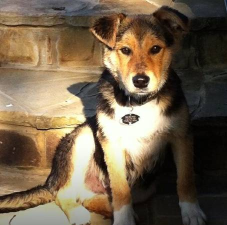 Free cute  amp  sweet Lucky needs a loving home  Tyler  TX