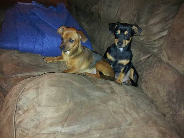 LOST  TWO DOGS  Ore City