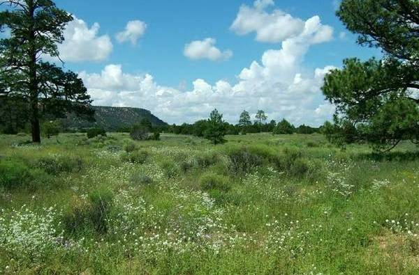 5 Acre New Mexico Ranchette  near Grants  NM