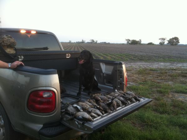 ((Guided Duck Hunting)) (Katy, Waller, Brookshire)