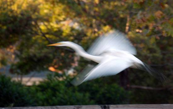 Collecting Stories of Bird Encounters after the Death of a Loved One