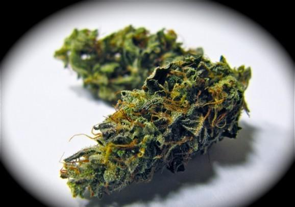 Indoor OG and other related Strains