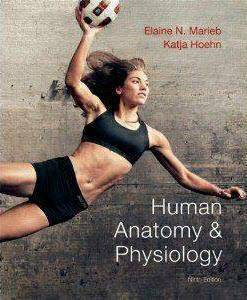 Human Anatomy and Physiology Test Bank 8th or 9th ed Marieb, Hoehn - $15 (Everywhere)