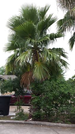 Three Palm Trees (Houston)