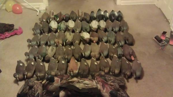 7dz duck decoys - $175 (galveston county)