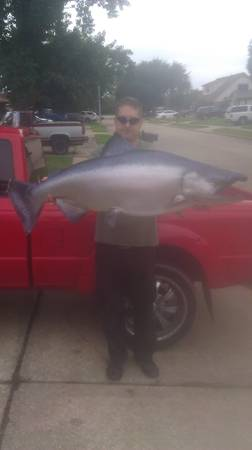 huge 50 in salmon taxidermy replica mount  - $140 (clearlake)