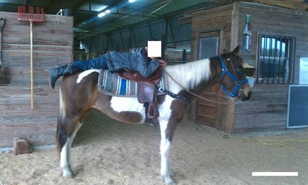 Tri-Colored Paint Mare FOR SALE $1000 - $1000 (CONROE,TX)