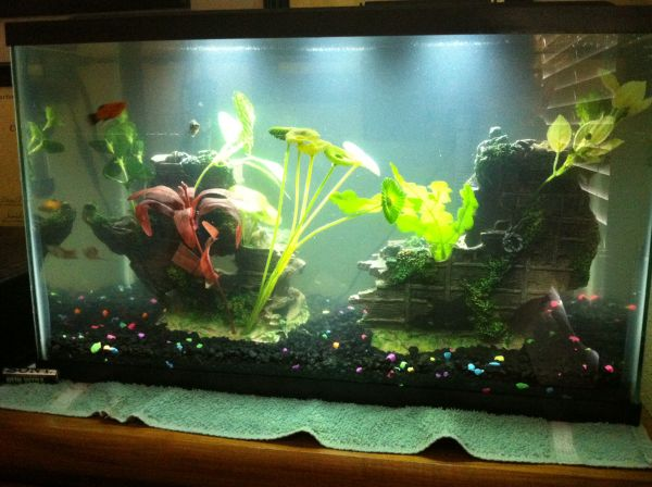 10 gallon fish tank with 5 fish, - $120