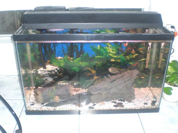 30 GAL FISH TANK FISH MANY EXTRAS MAKE ME AN OFFER - $100 (WILLOWBROOK AREA)