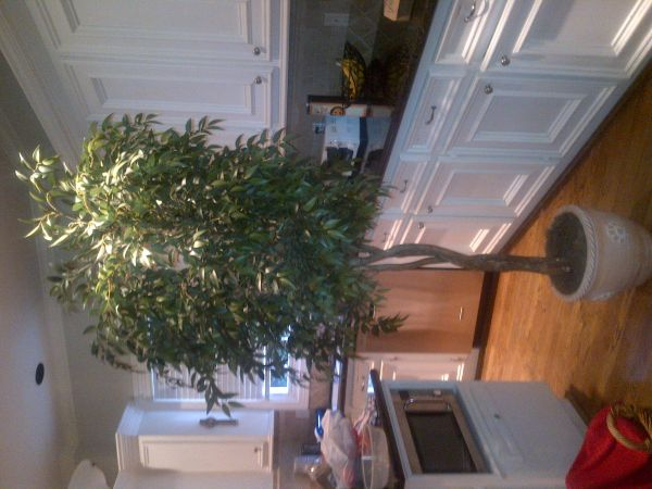 8 FT. fake artificial ficus silk tree - $100 (west u)