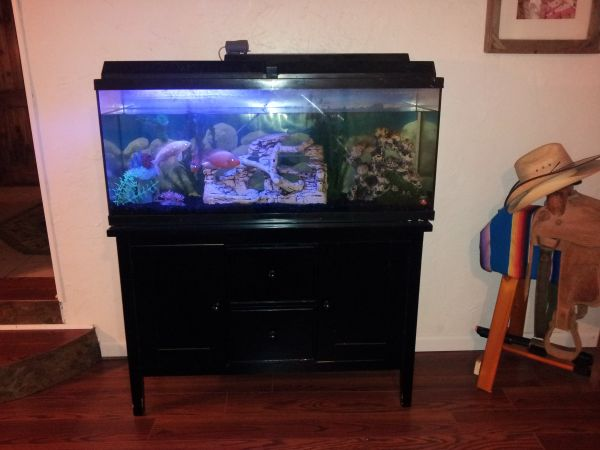 55 gallon fish tank and stand and fish - $175 (HH Killeen Belton)