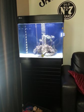 RED SEA MAX plug play aquarium - $900 (Killeen, Fort Hood, HH, CC)