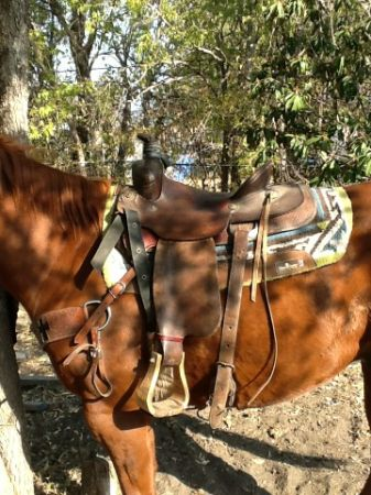 2 roping saddles for sale - $950 (Nolanville tax)