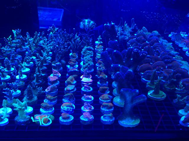 NEW SaltwaterReef Tank Forum