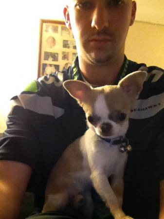 Want to mate my chihuahua for a puppy  Lafayette