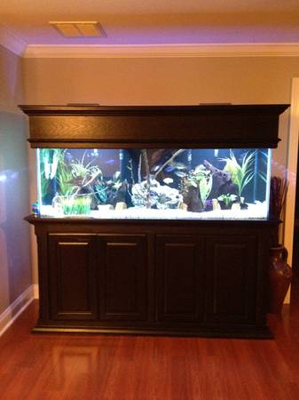 180 Gallon Aquarium Fully Stocked African Cichlid SetUp (High Quality) - $2000 (Lafayette)