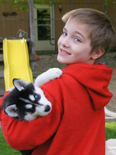 200  Adorable male and female siberian husky puppies